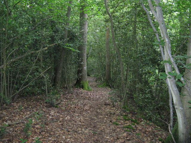 Bridleway in Durfold Wood