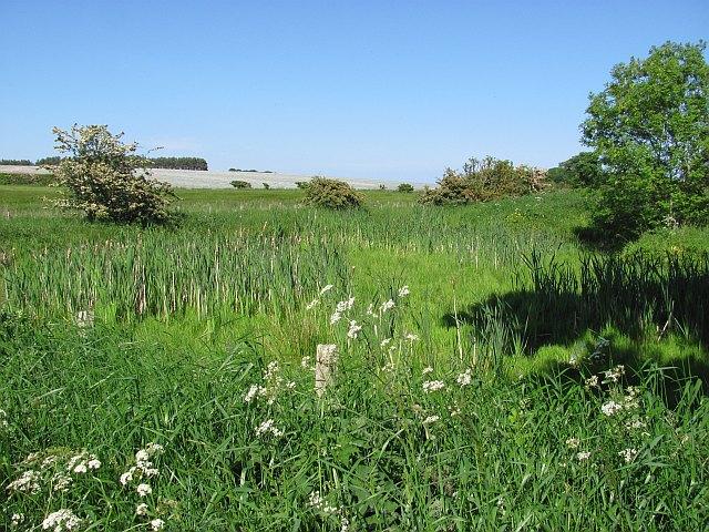 Wetland corner