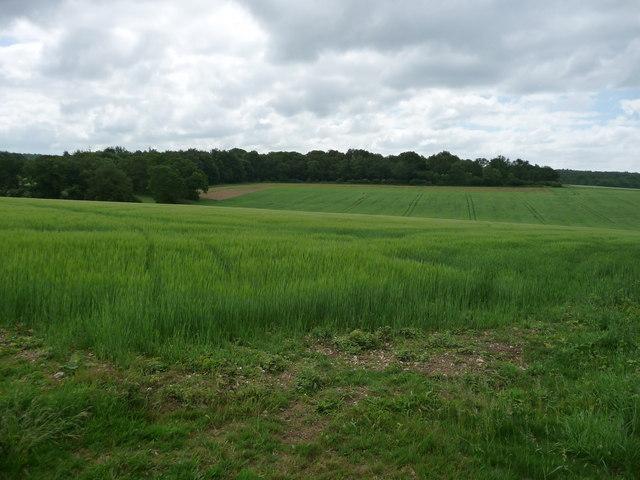 Sandydown - Wheatfield