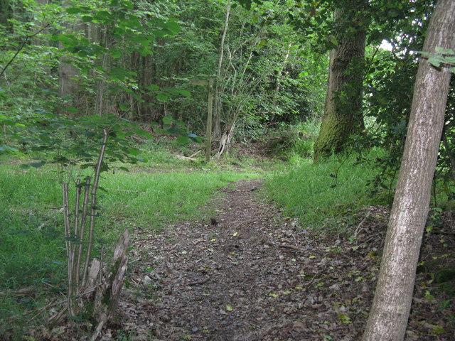 Waymarker for bridleway in Durfold Wood