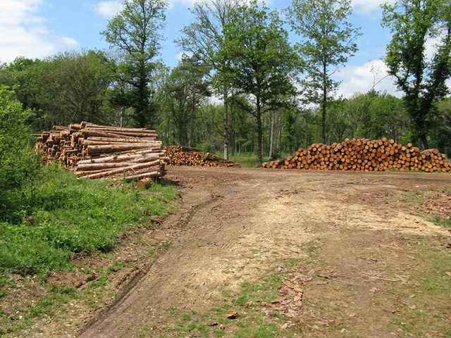 Log piles at track and bridleway junction