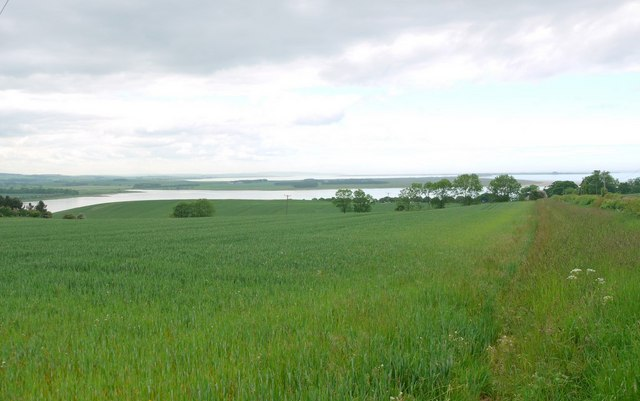 Wheat field above Budle Bay