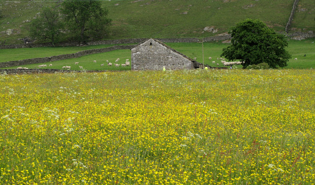 Dales Barn Over Hay Meadow
