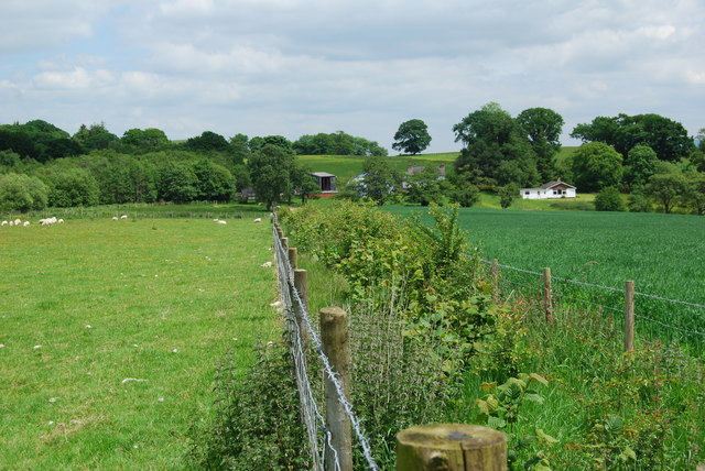 Well established new hedge
