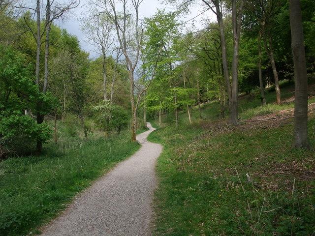A pleasant path through Queen Elizabeth Country Park