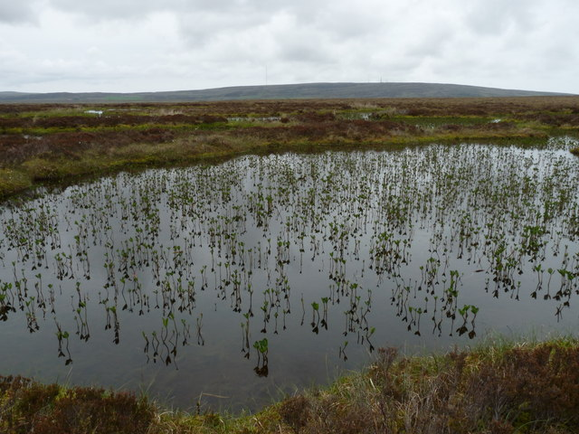 Lochan on moorland near Houstry