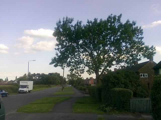 Cole Lane, Borrowash