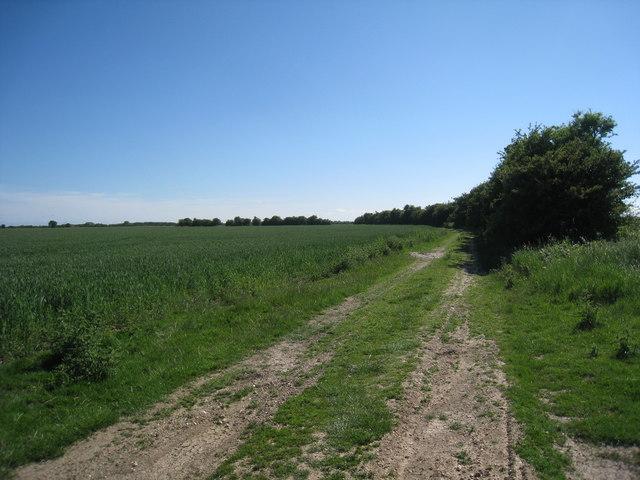 Track across Orby marsh