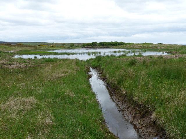 Mill Pond, Latheronwheel