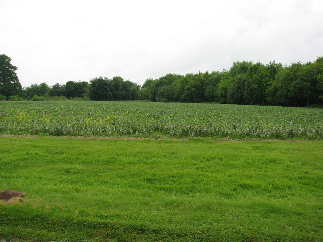 Field near Little Haseley