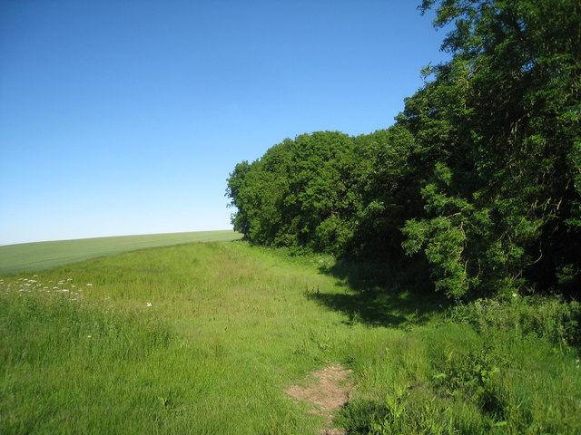 The edge of Ruckland Gate Plantation