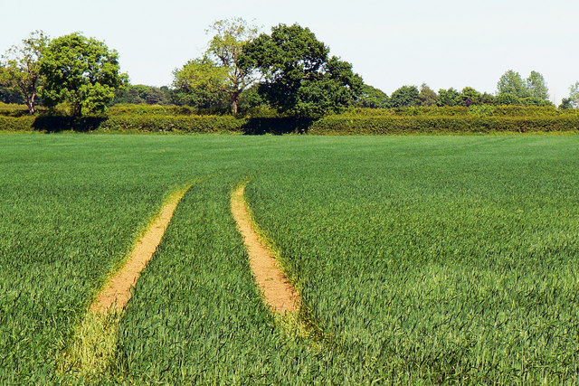 Tracks in the wheat near Poulton Priory