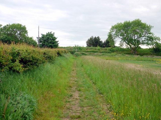 Footpath to Shada Plantation