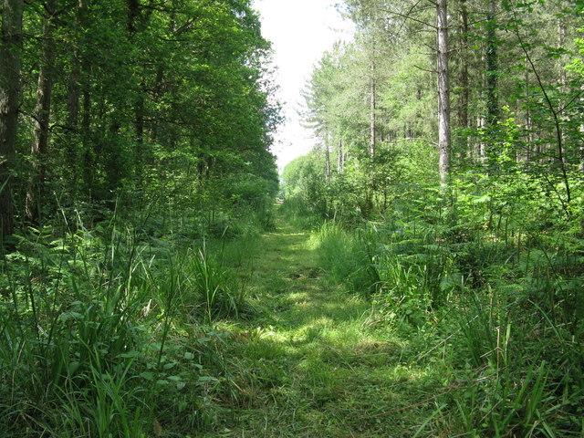 Footpath NW in Tugley Wood