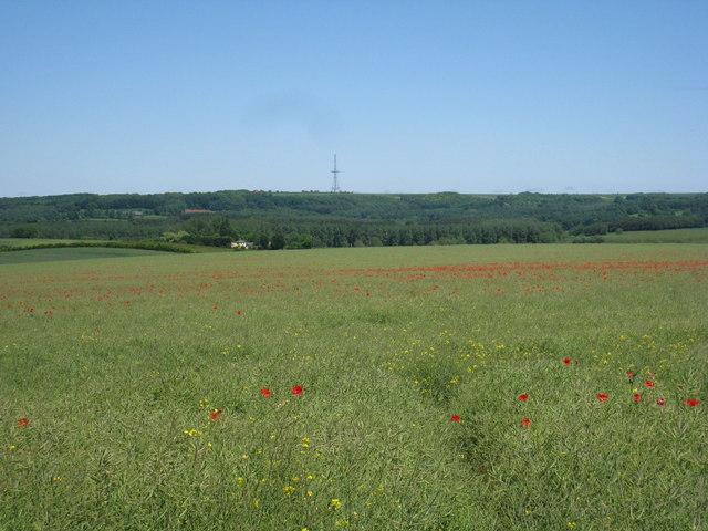 View towards Stenigot pylon