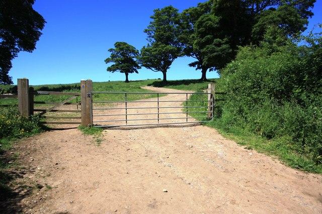 Public footpath to Errington Wood
