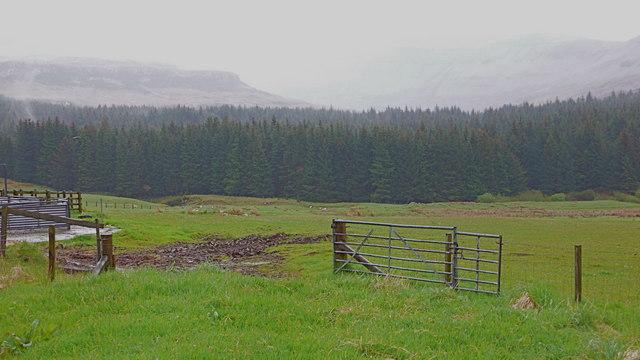 Forestry south of Glenuachdarach, Skye