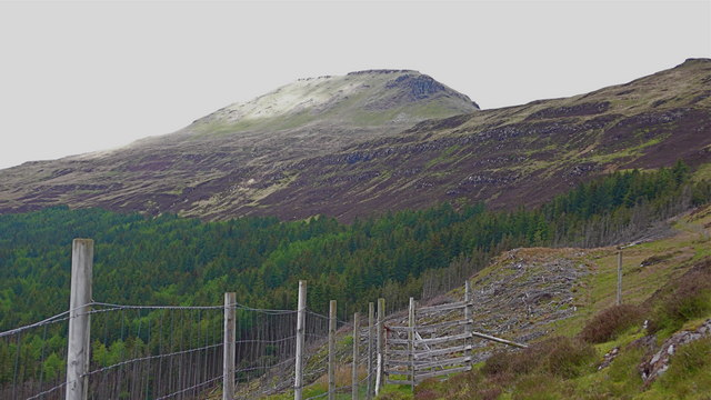 Deer fence and gate at forest edge - below An Cruachan, Skye