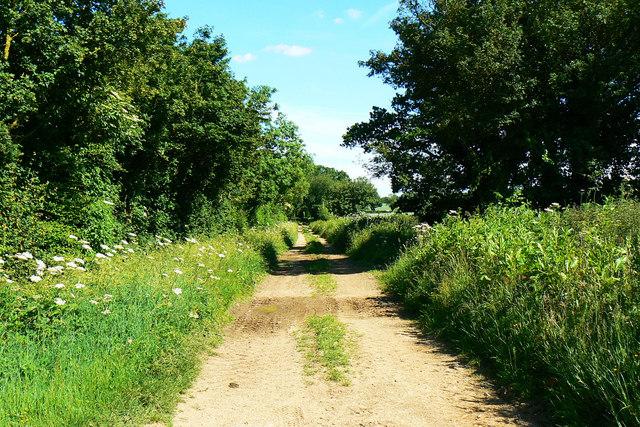 Byway near Manor Farm, Driffield