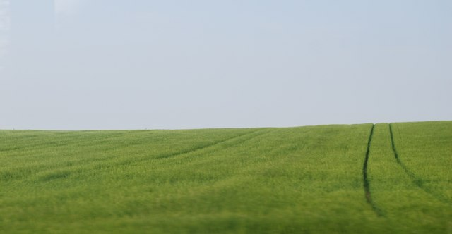 Wheat by the B1447