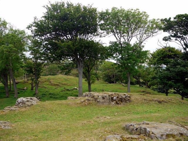 Shada Plantation