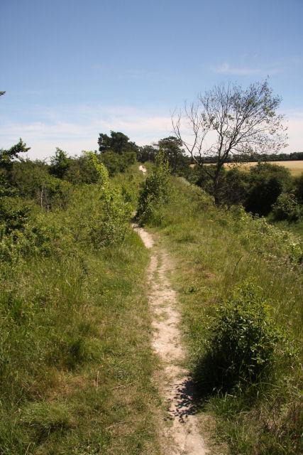 Devil's Dyke, near Newmarket