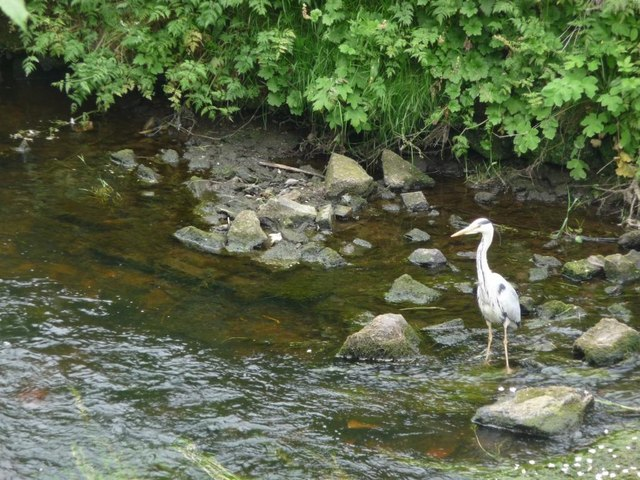 Water of Leith angler