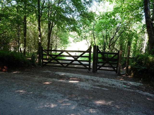 Chapel Woods, RSPB site