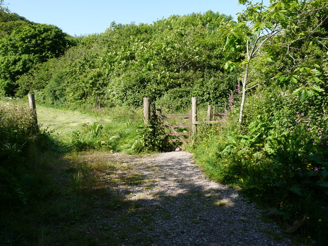 Part of the RSPB site in Chapel Woods