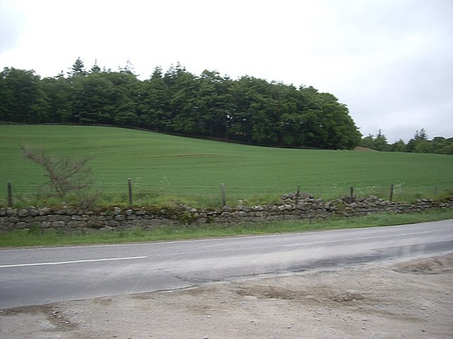 Western end of Craiglug Wood