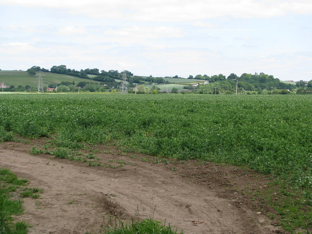 Arable field near Horsey