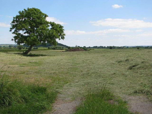 Field near Bradney