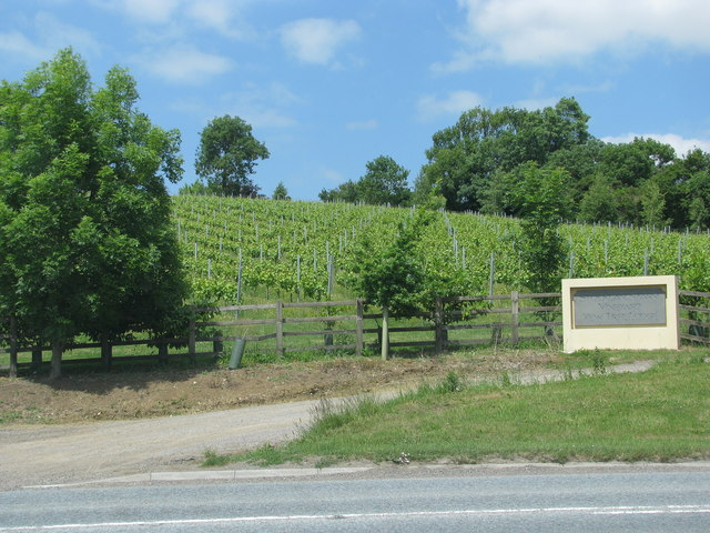 Vineyard above the A39