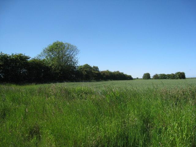 Field at Habertoft