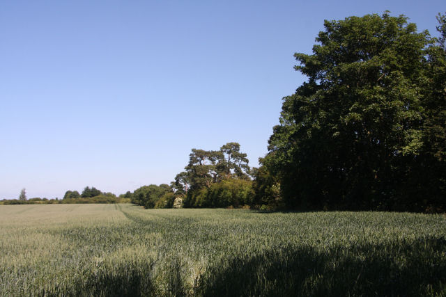 Wheat field near Newmarket