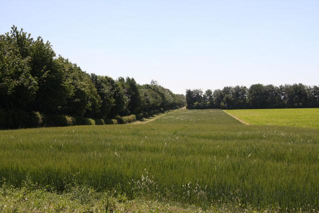 Farmland near Newmarket
