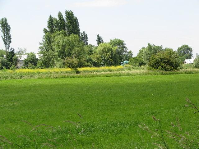 Field on Weston Level