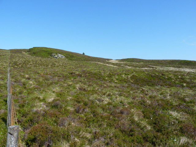 Heather moorland and a lonely tree
