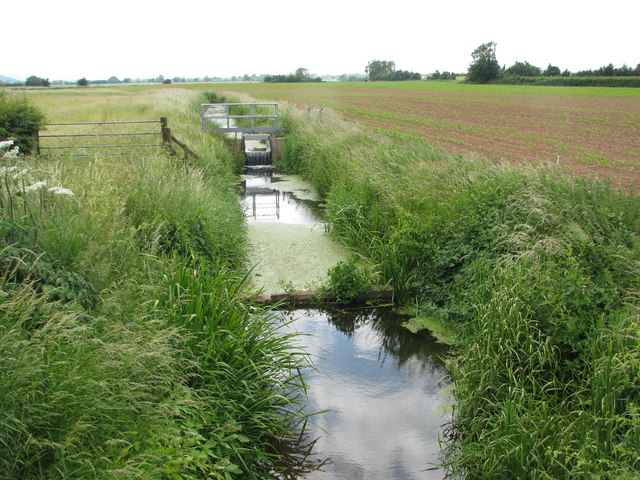 The Old Rhyne crossing Lyng Moor (looking west)