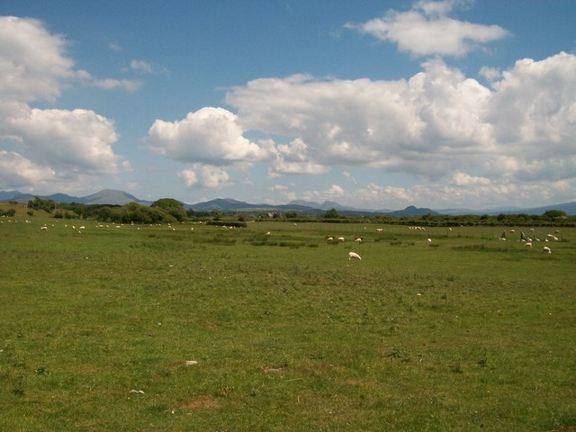 Sheep pastures east of the Bryn Bachau road