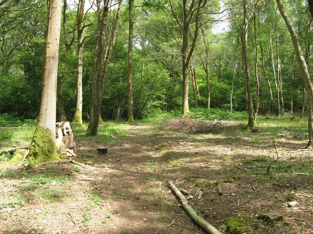 Footpath in Oak Wood