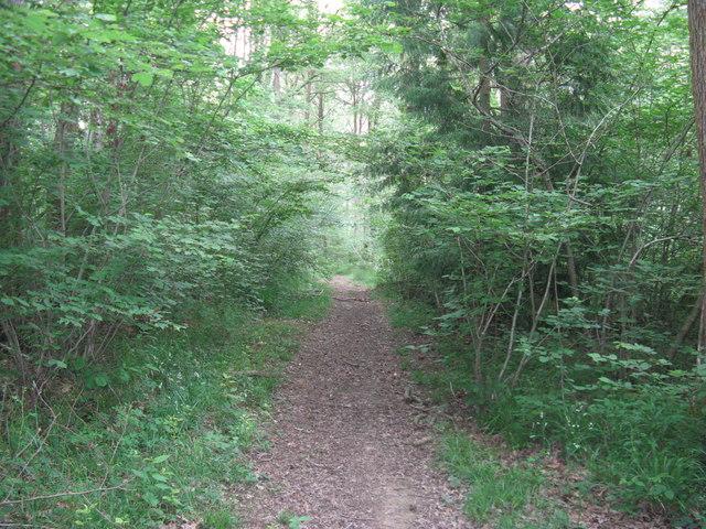 Path in Canterbury Copse