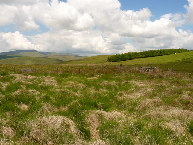 Fences and rough grazing below Llanerchfydaf