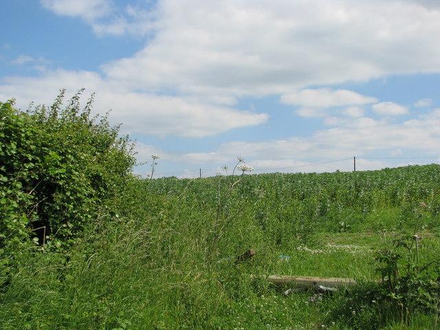 Field near Staple Fitzpaine