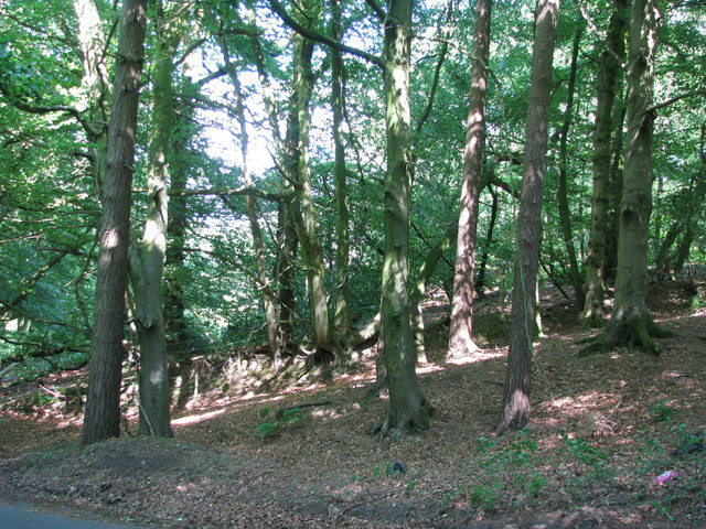 Trees grow on a hedge bank near Wellington