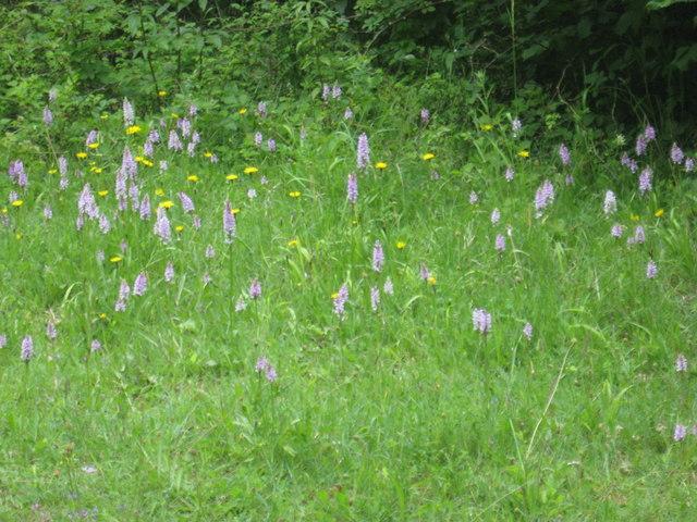 A bosky glade in Westridge Wood