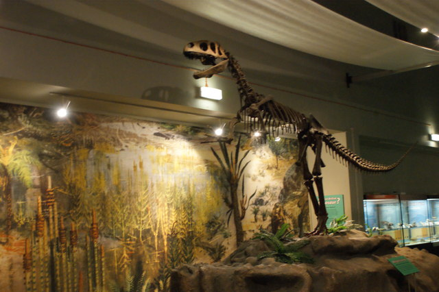 A megalosaurus in the Liverpool Museum