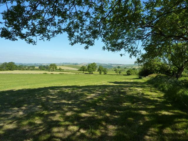 Meadow south of Banktop Farm