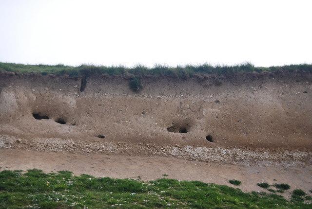 Rendzina soil Profile