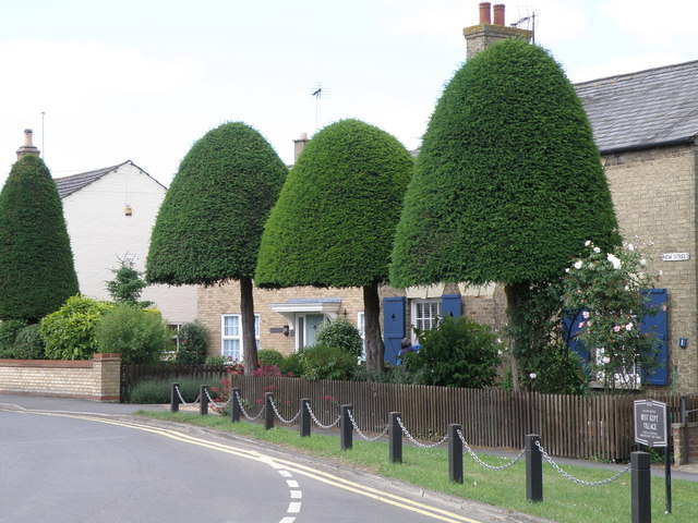 Yew toad stalls in Doddington